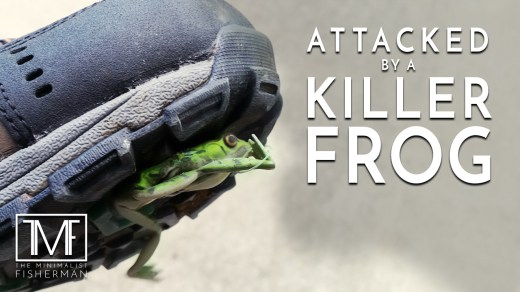 Attacked by a Killer Frog