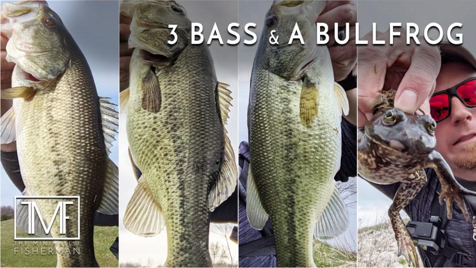 3 Bass & a Bullfrog