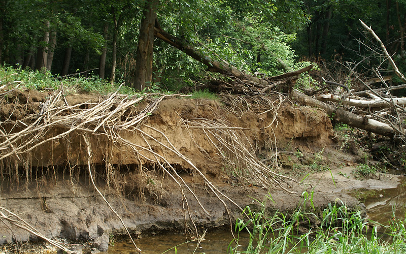 Example of Stream Bank Erosion