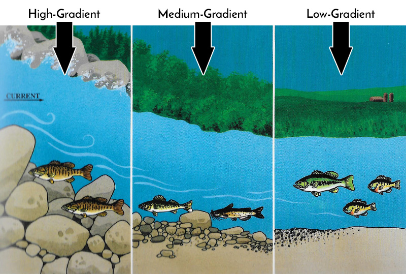 River and Stream Fish Location by Current and Gradient