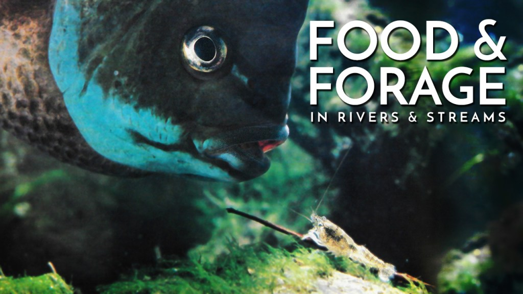 Food & Forage in Rivers and Streams