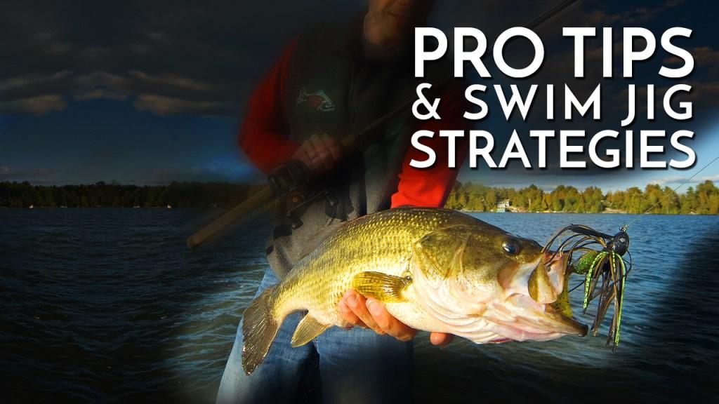 Pro Tips and Swim Jig Strategies