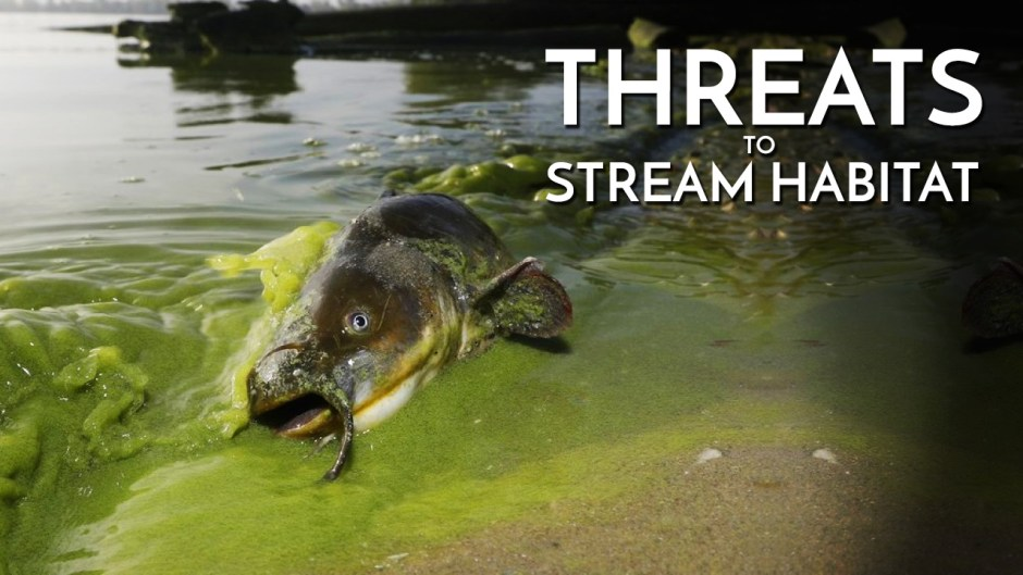 Threats to Stream Habitat