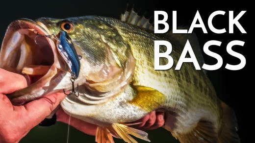 All About the Black Bass
