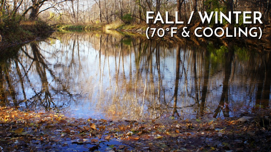 Fall into Winter Transition