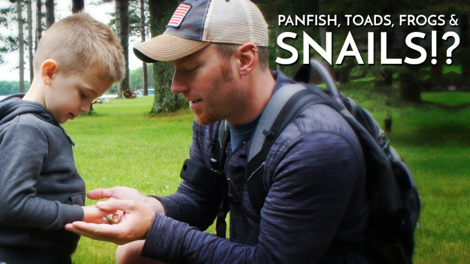 Panfish Toads Frogs & Snails