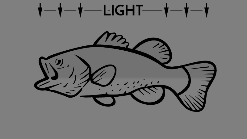 Bass Coloring at Twilight or in Dim Light