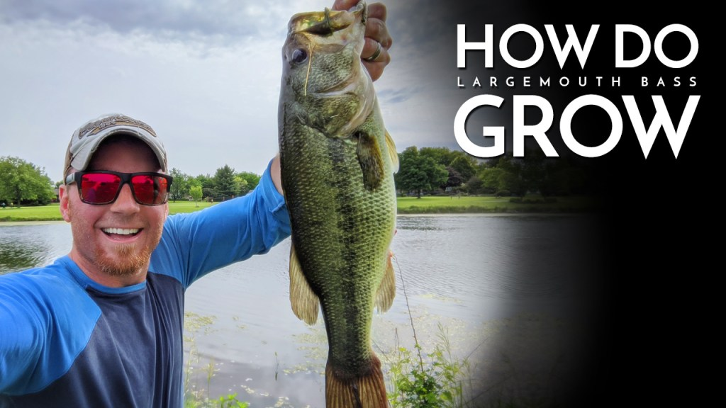 How Do Largemouth Bass Grow?