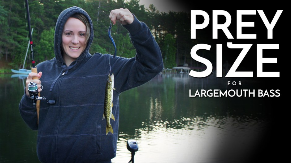 Prey Size for Largemouth Bass