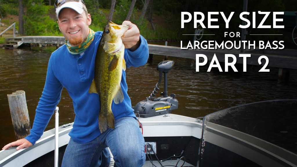Prey Size for Largemouth Bass Part 2
