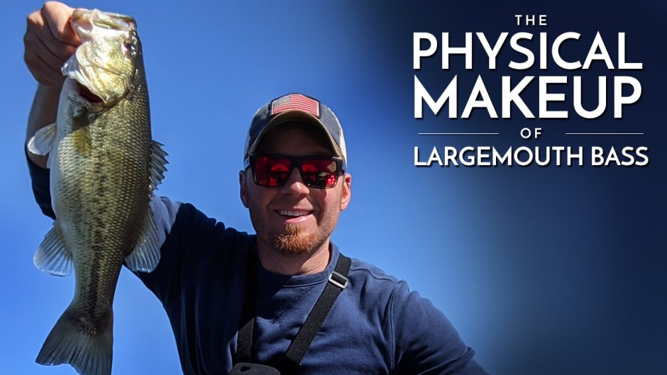 The Physical Makeup of Largemouth Bass