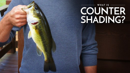 What is Countershading? Counter Shading