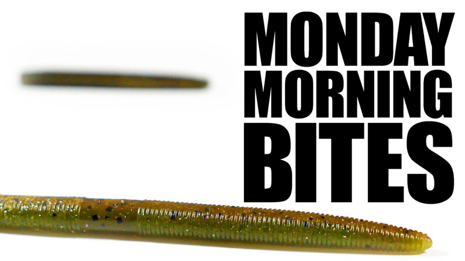 Monday Morning Bites Episode 8 Zlinkys are Sick
