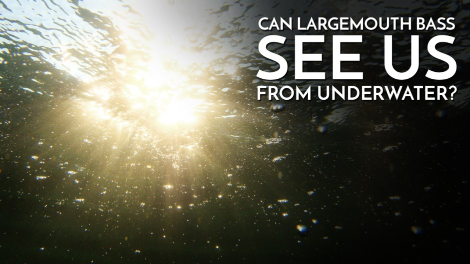 Can Largemouth Bass See Us From Underwater?