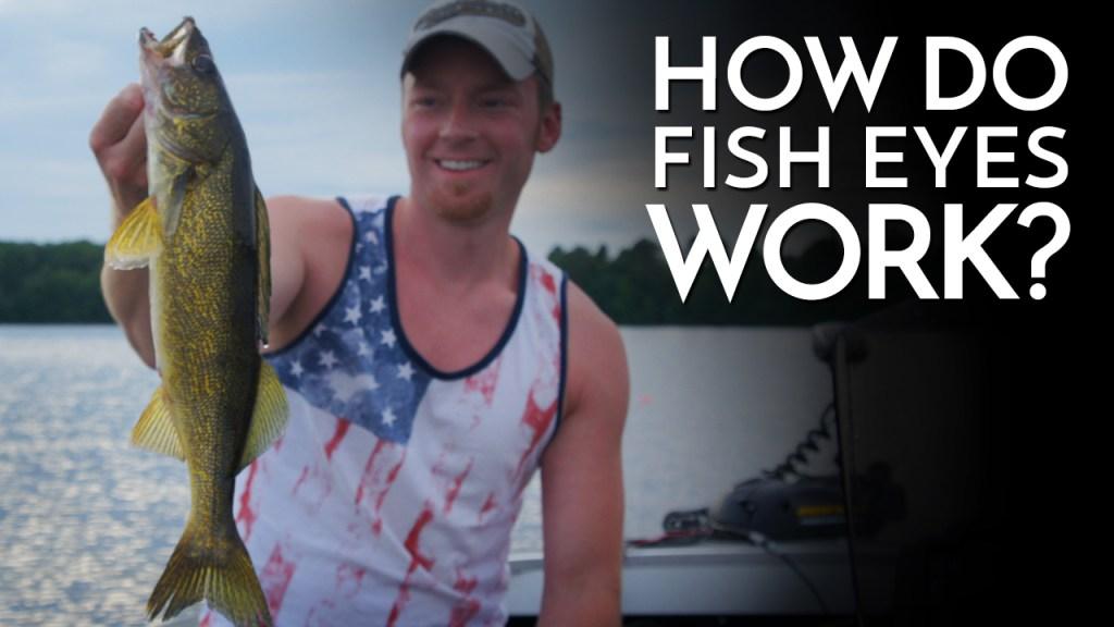 How Do Fish Eyes Work?