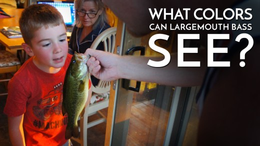 What Colors Can Largemouth Bass See?