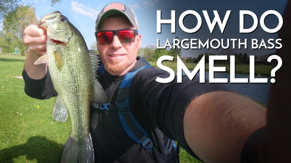 How do Bass Smell?
