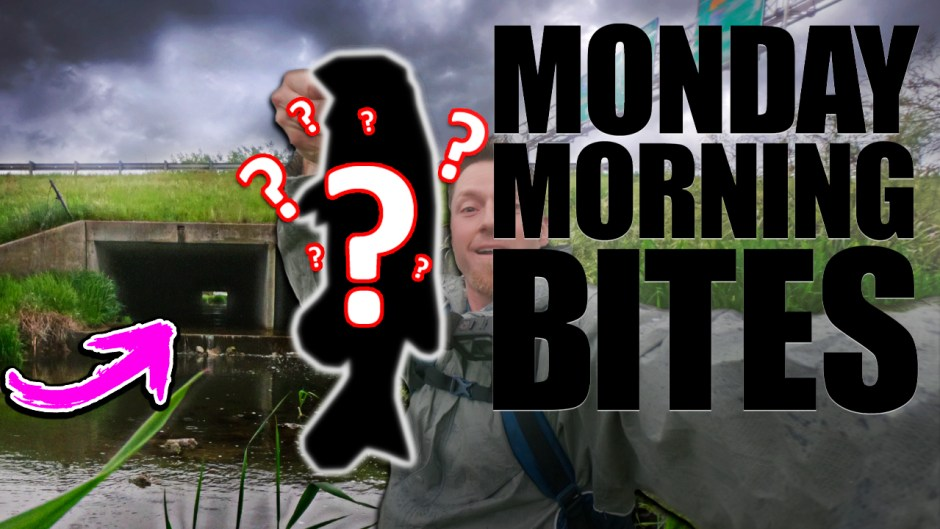 Monday Morning Bites 12 What Lurks Below the Interstate
